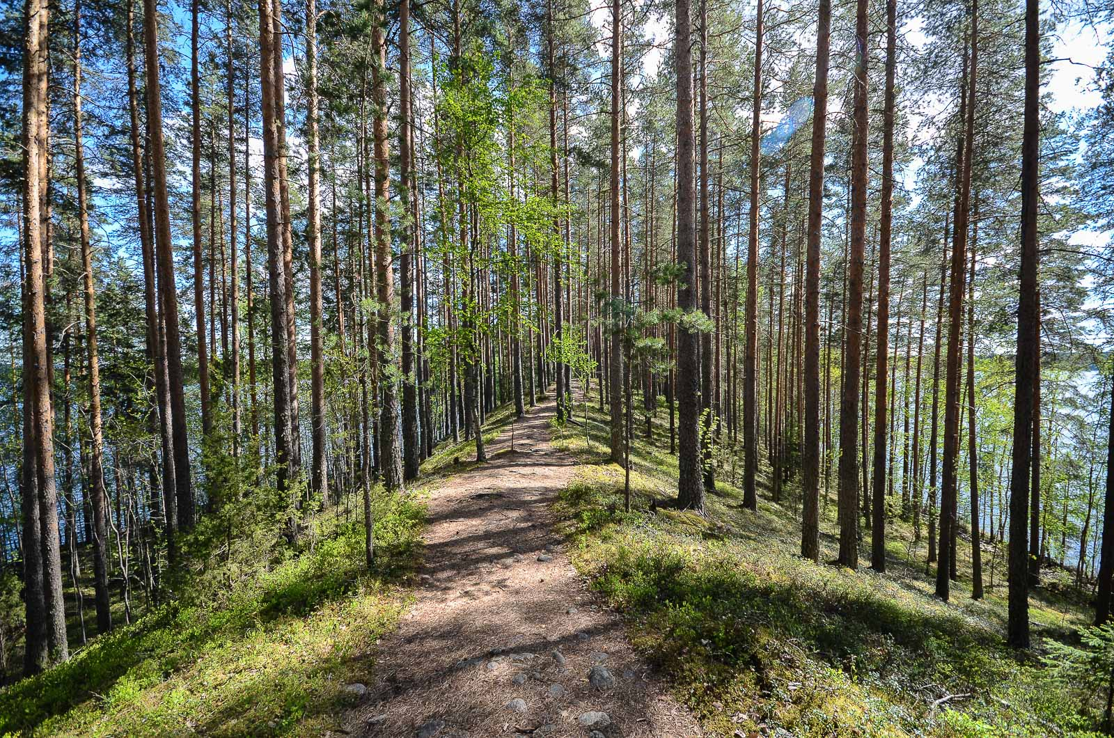 Leivonmaki-Joutsniemi-harjumaisema-UpeNykanen_1600px