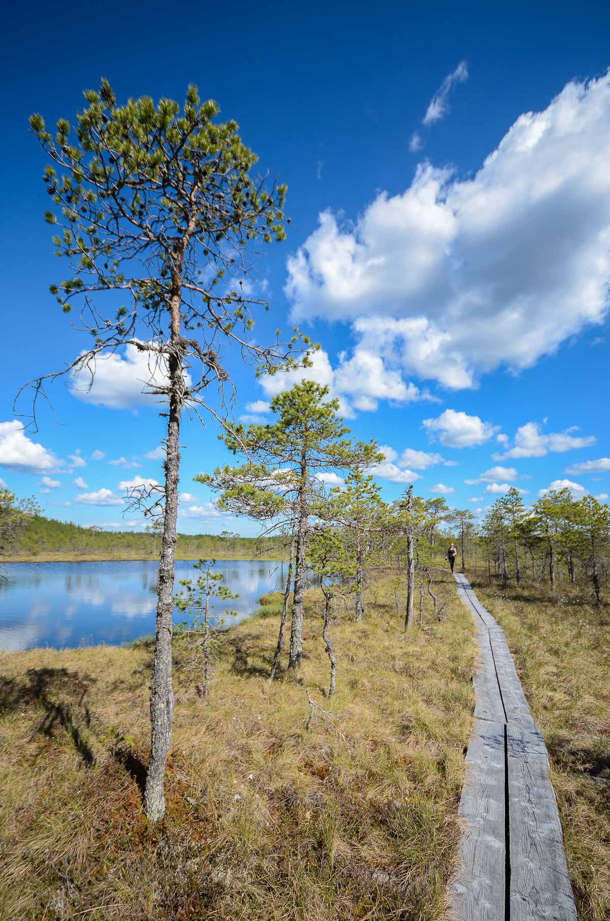 Leivonmaki-kansallispuisto-kavelija-manty-pitkoksilla-1200px